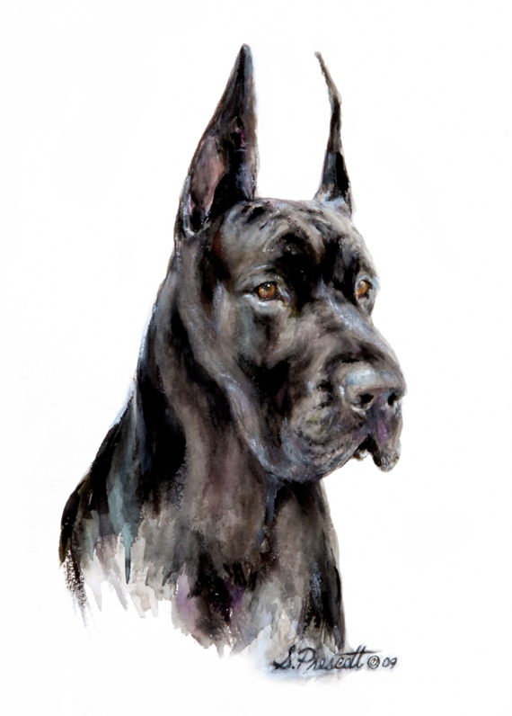 Great Dane - Tonka